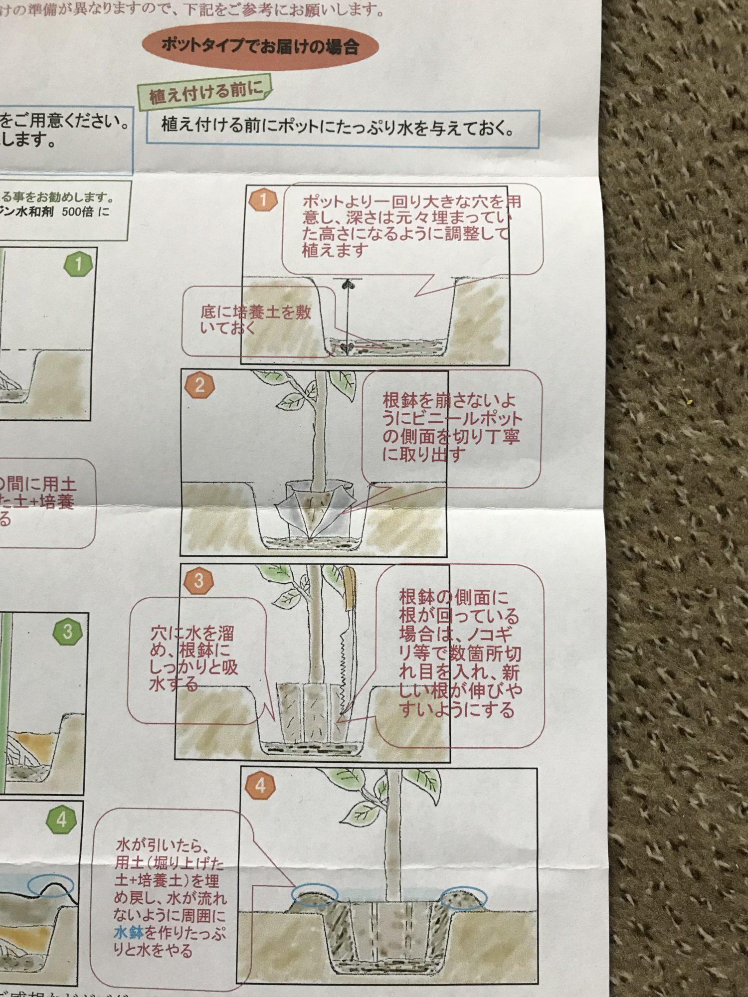 苗木の植え方、イラスト付き
