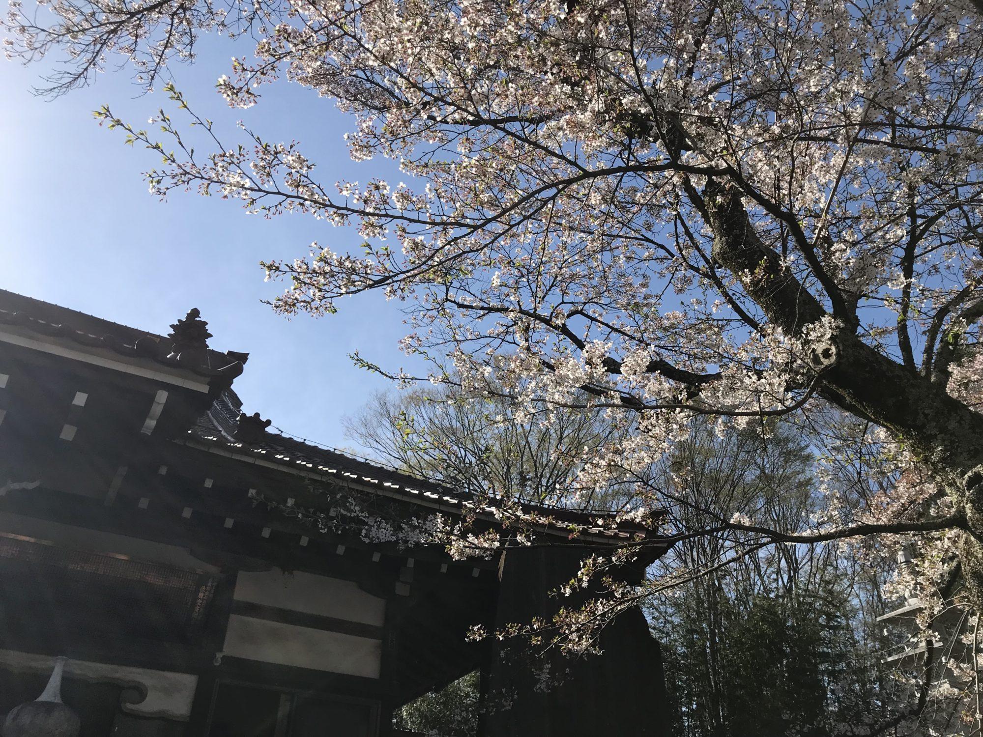 実相寺の桜と空