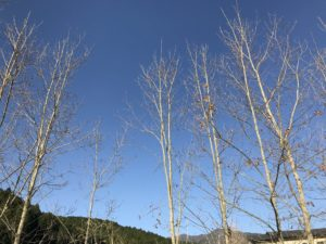 青空とクヌギの木