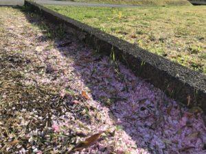 桜のミニじゅうたん