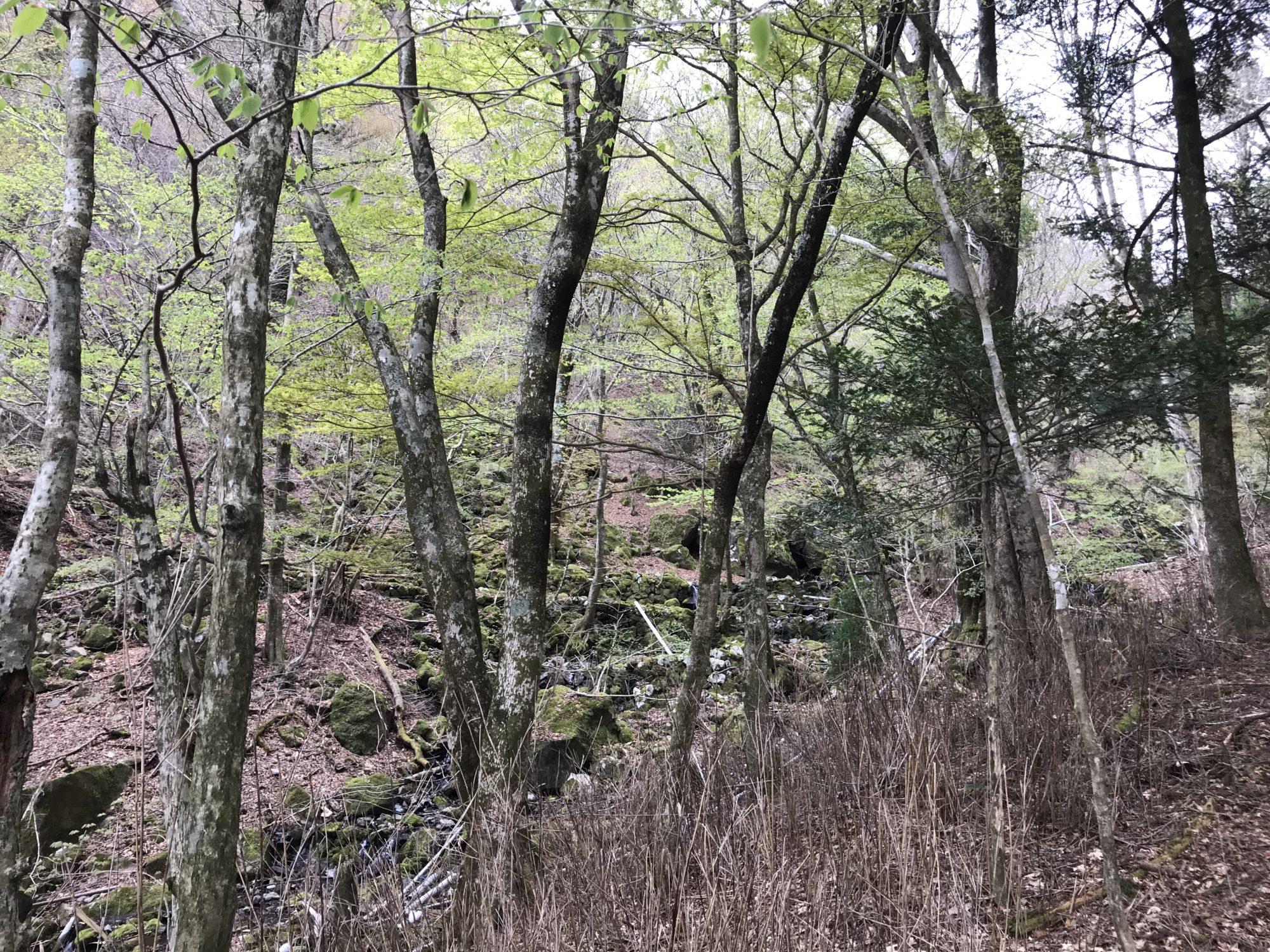 水源地の雑木林