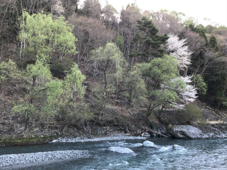 朝の入野谷前の川