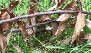枝にあったハチの巣