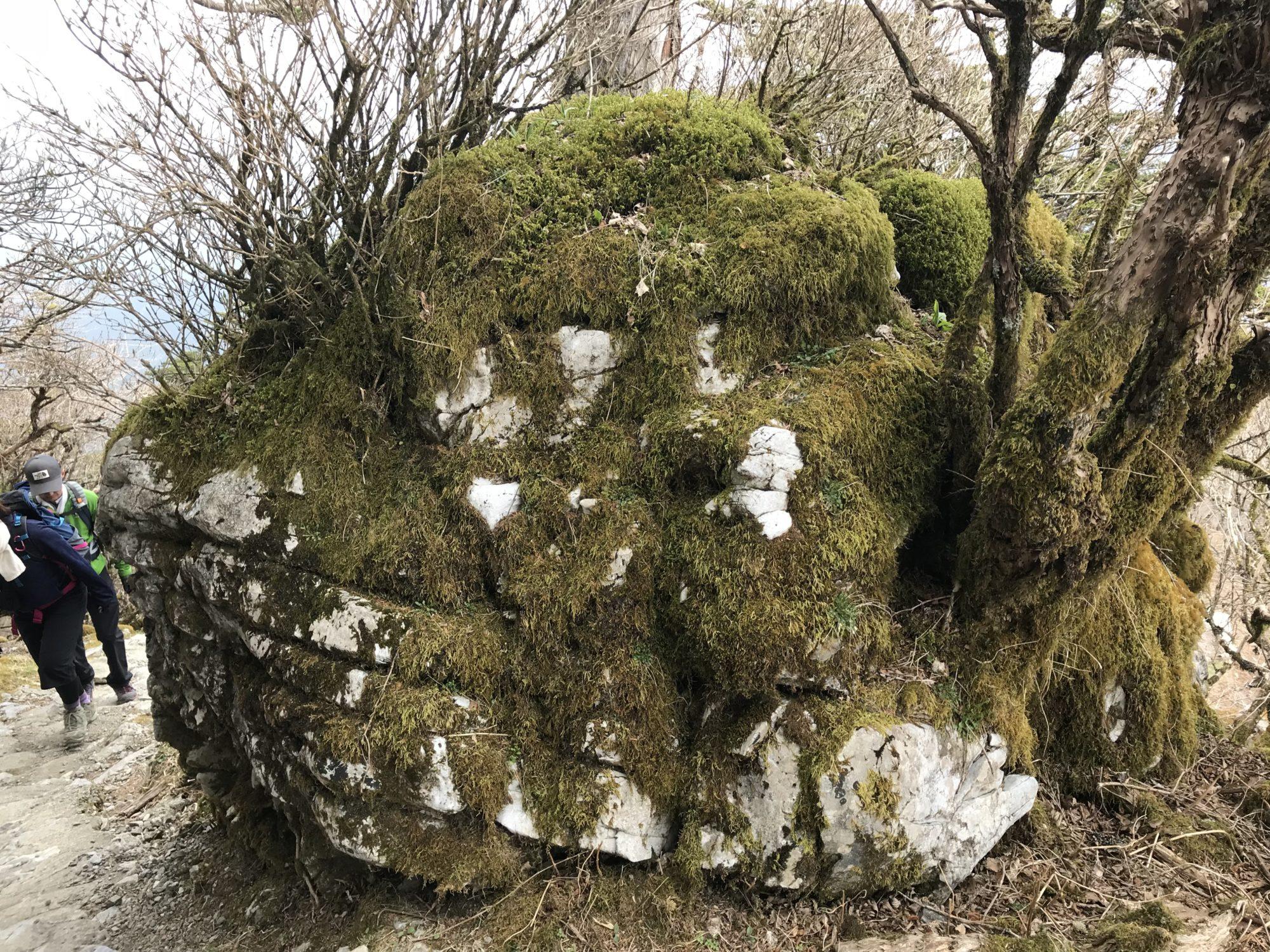 剣山の大きな岩
