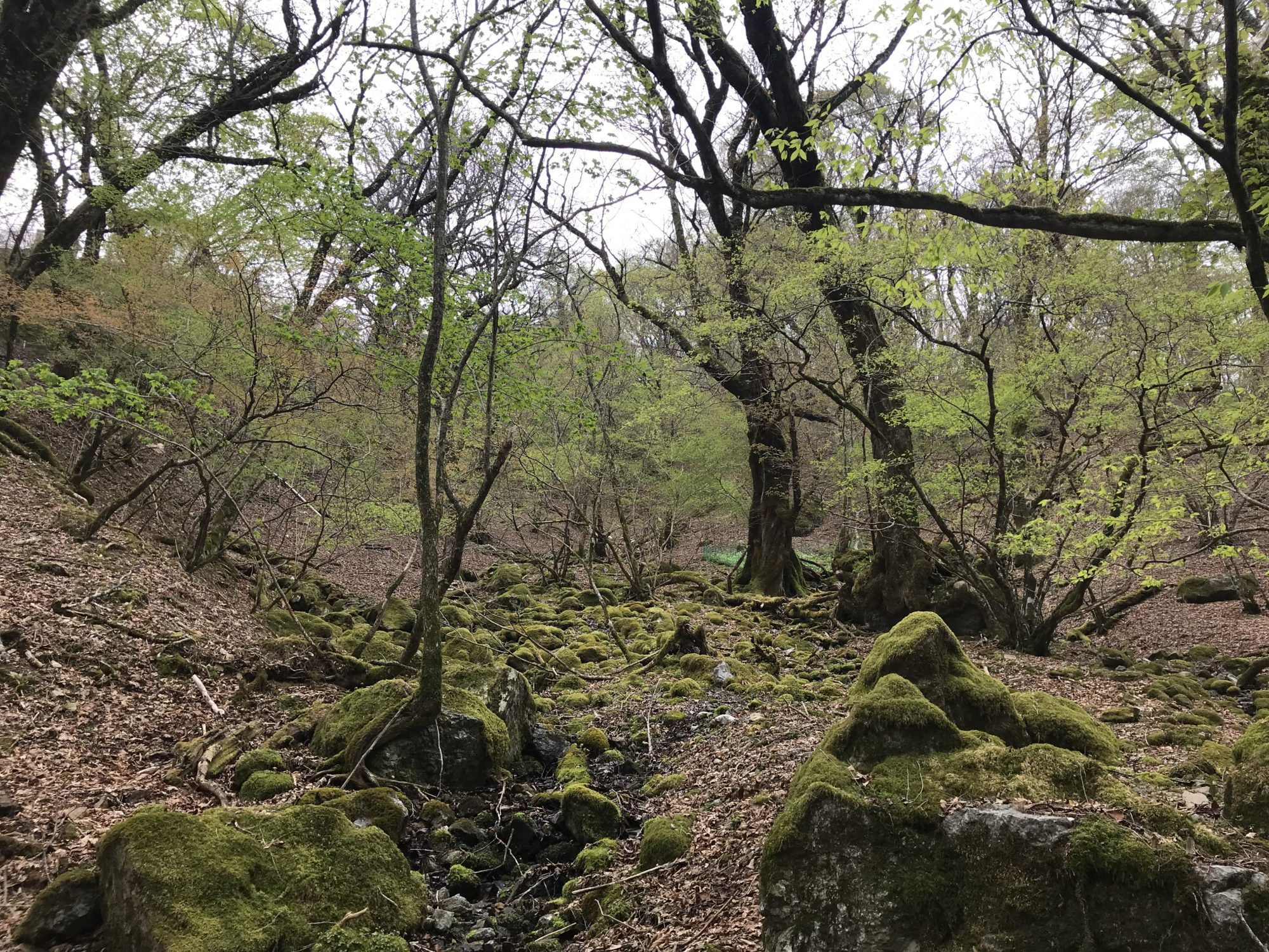 苔むした岩と樹々