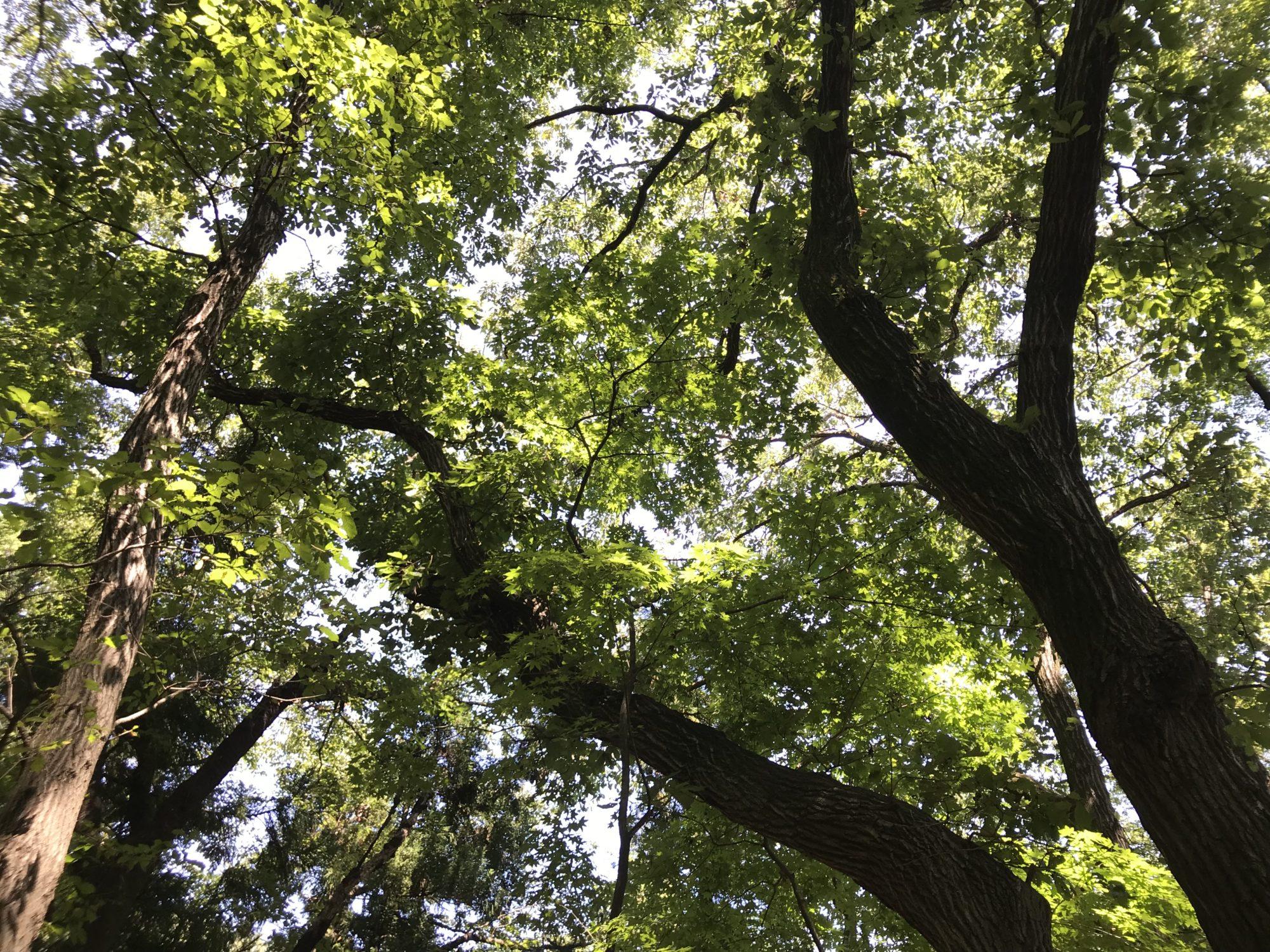 白山の木漏れ日