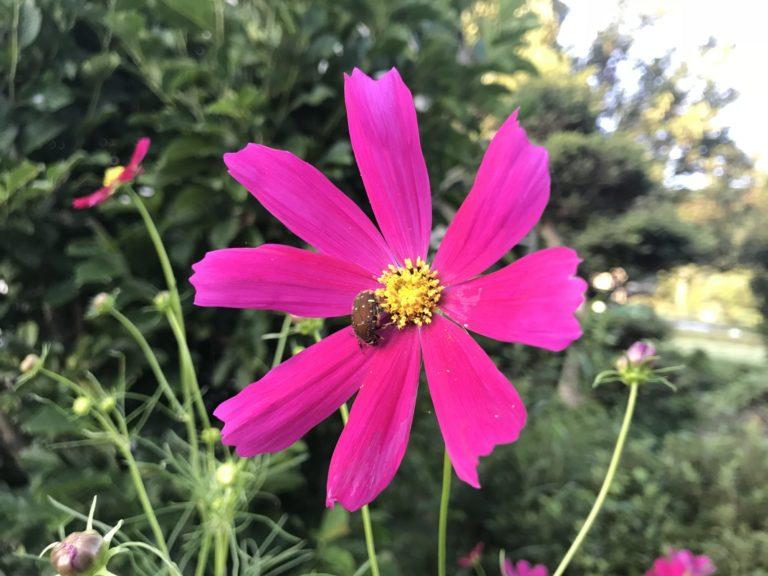秋らしい花