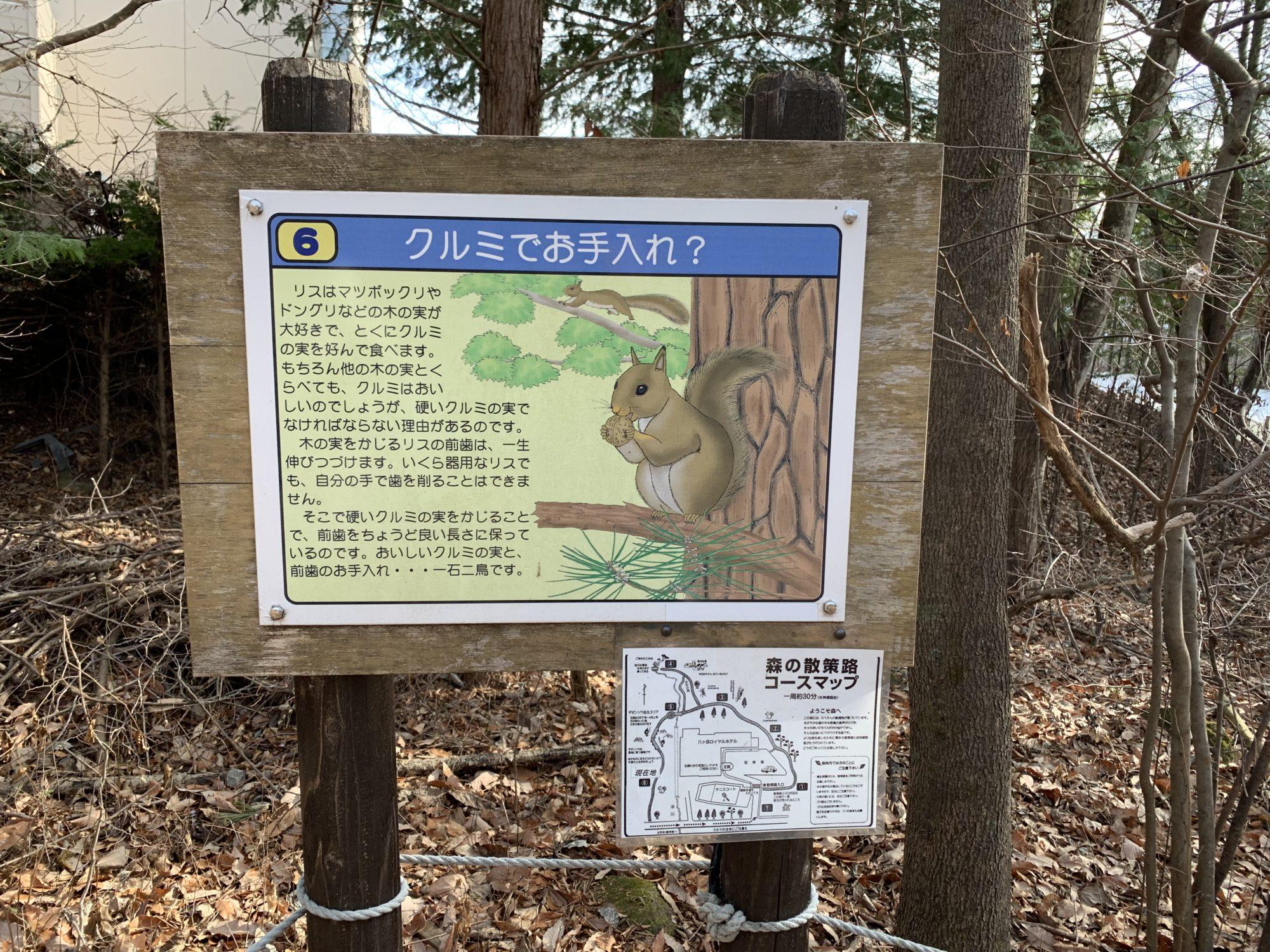 ロイヤルホテル八ヶ岳散策路