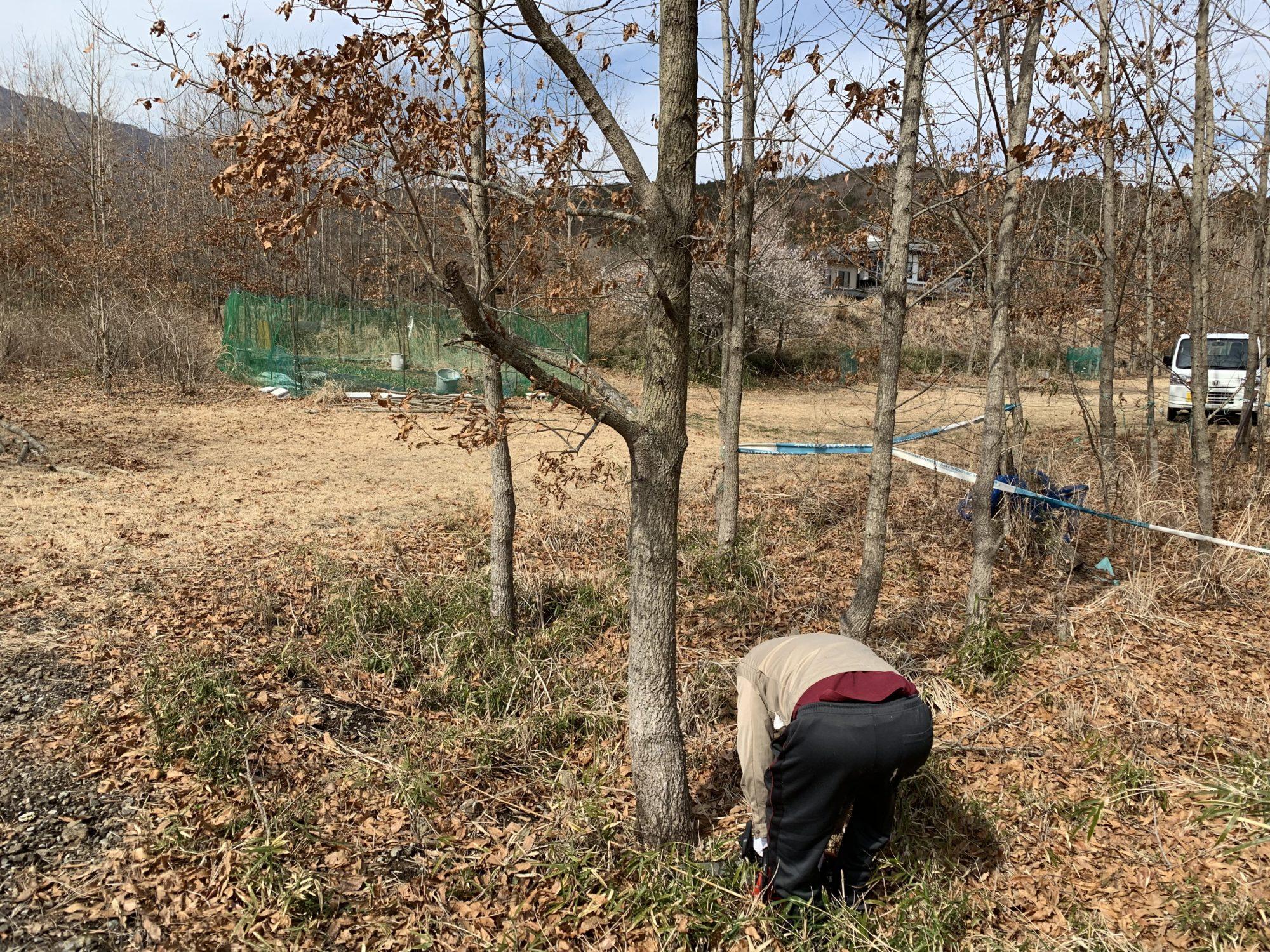 くぬぎの木を切り倒す