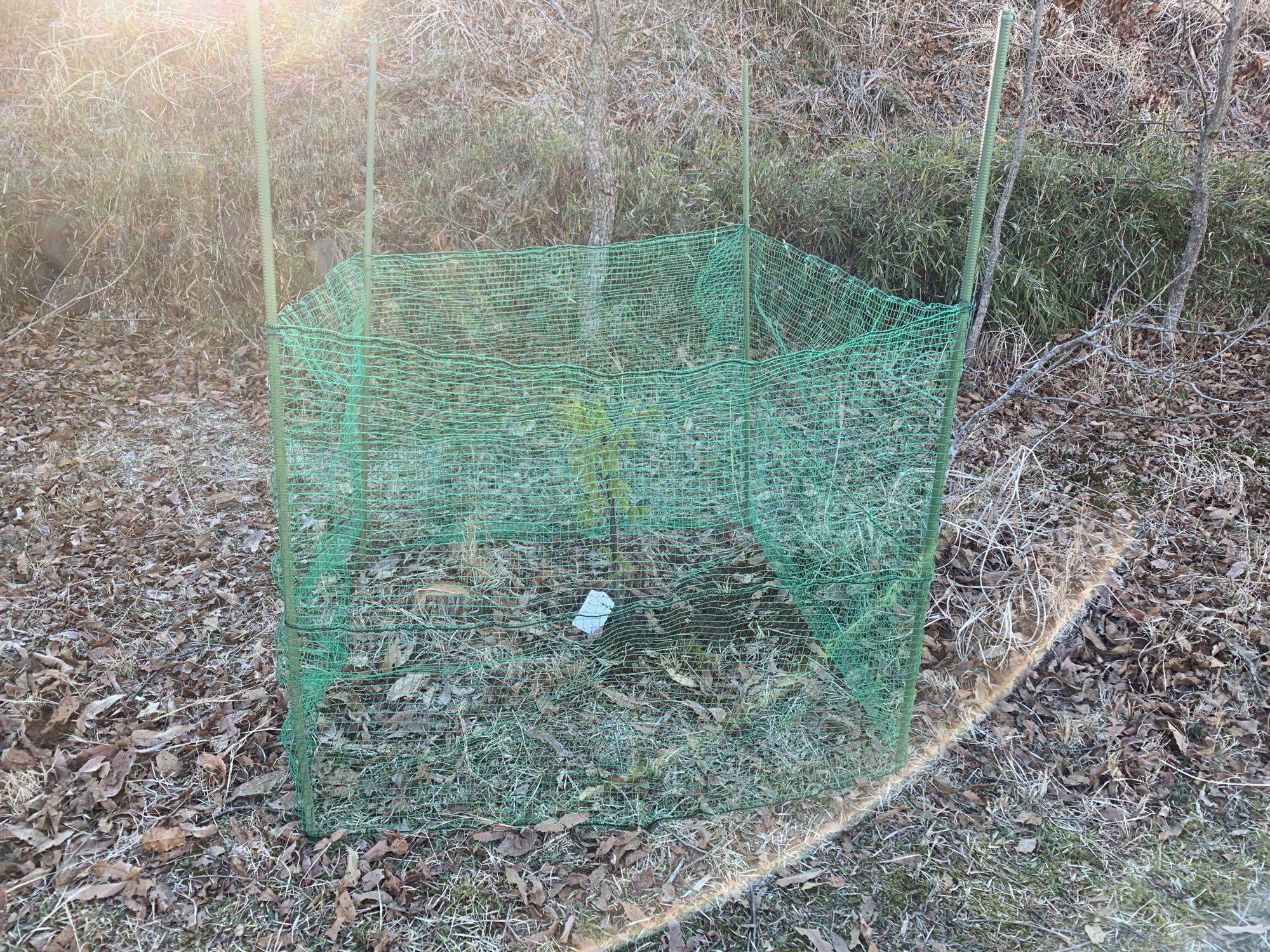 河津桜の周りのネット